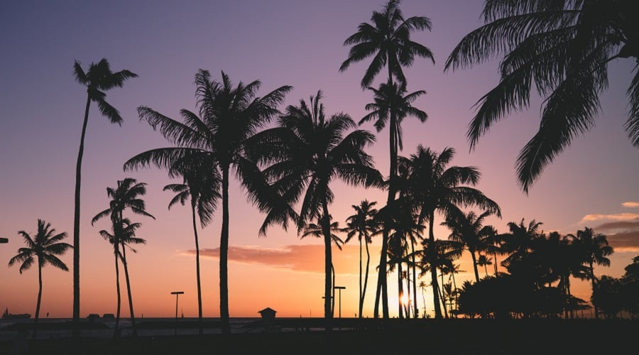 Silhouette of palm trees near the beach at sunset