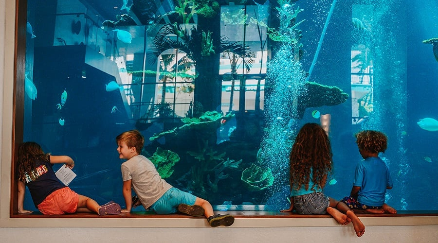 Four children sitting in front of oceanarium glass watching the fish swimming