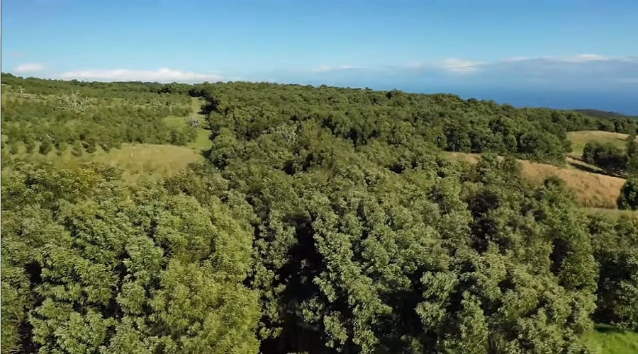 Aerial view of 'Alohilani legacy forest on Oahu's North Shore