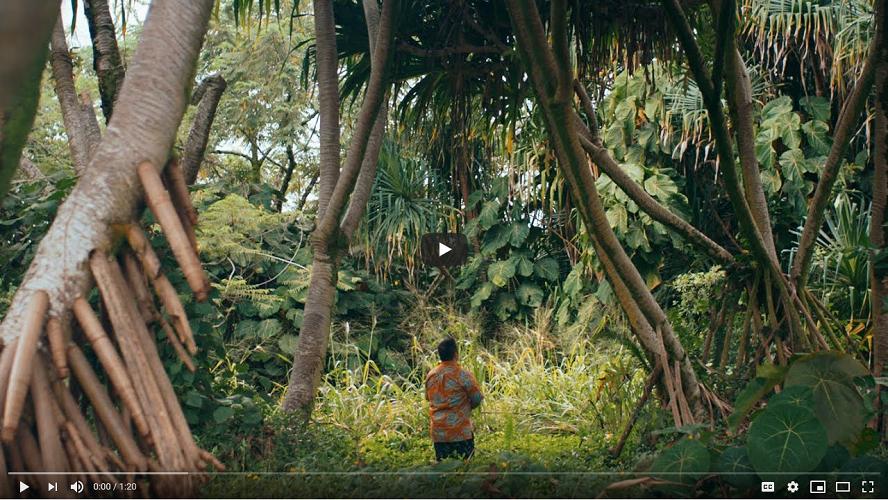 Man standing in Hawaiian rainforest